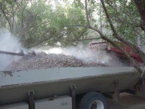 nut harvest safety