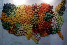 Big Vegetable Map