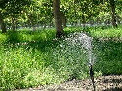 Groundwater Policy Confusion at State Level