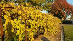 WANTED:  New Director, Fresno State Viticulture and Enology Department