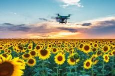 drones robobee