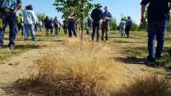 Paraquat Resistance in Weeds?