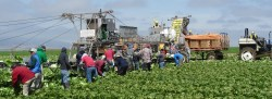 Alliance For Food and Farming Hosts Food Safety Media Tour
