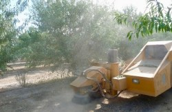 A Plan of Attack for the Dusty Almond Harvest