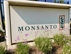 Monsanto: Jury Got it Wrong on Glyphosate