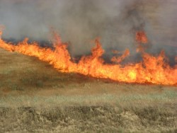 Livestock Owners Asked to Weigh in on Fire Impact
