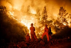 It's Past Time to Manage California Forests
