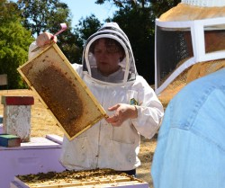 UC Davis Offering Beginner Beekeeping Classes