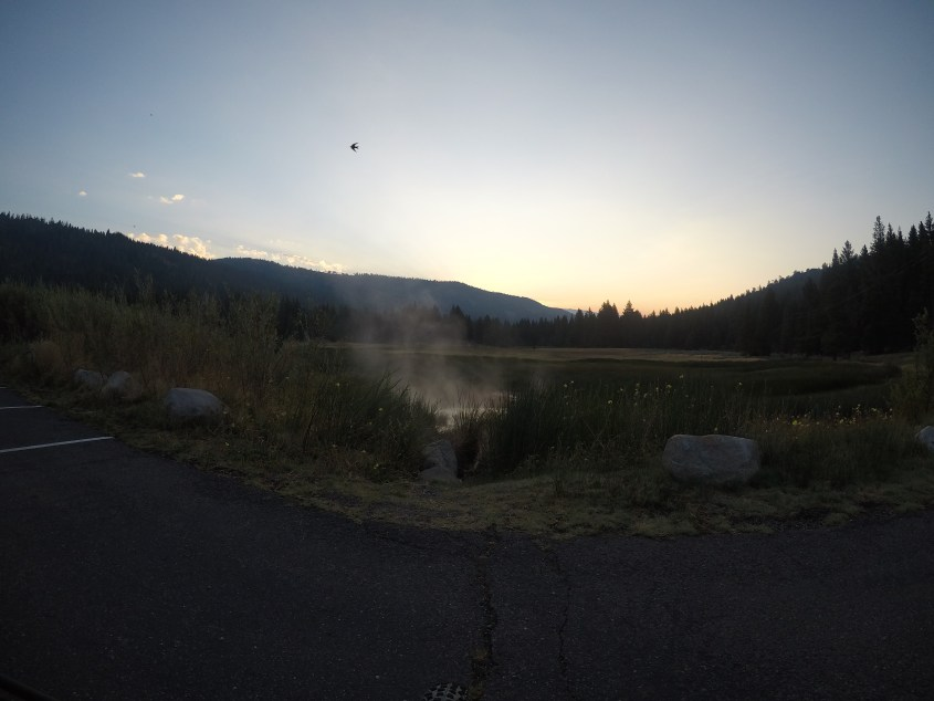 A swallow enjoying the sunrise and steam at Grover Hot Springs State Park.