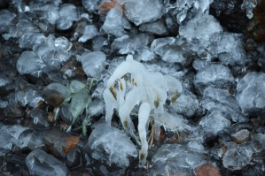 Tiny ice dancer.