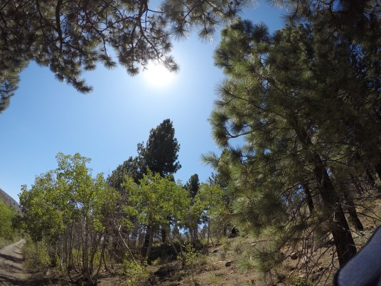 Sunshine through the trees - Heenan Lake Trail