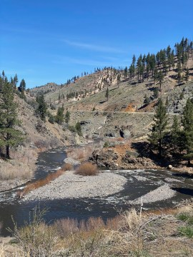 Looking downstream at the East Fork of the Carson from Monitor Junction.
