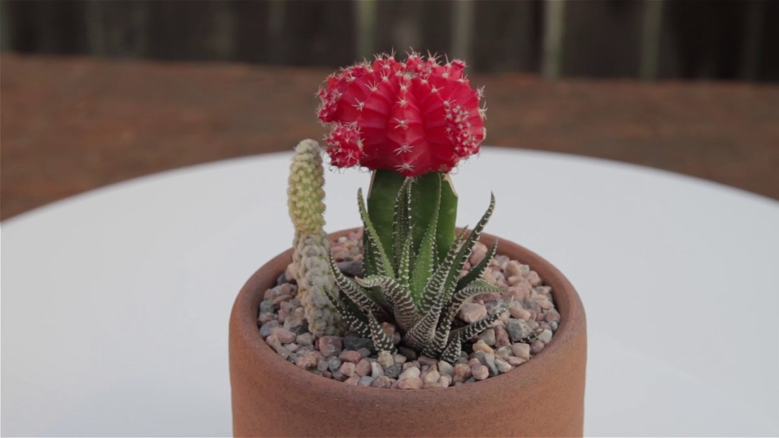 Desert Cactus Container Garden