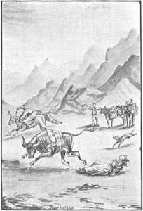 The Oxen Get Frisky