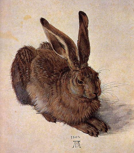 A_Young_Hare, Albrecht Dürer