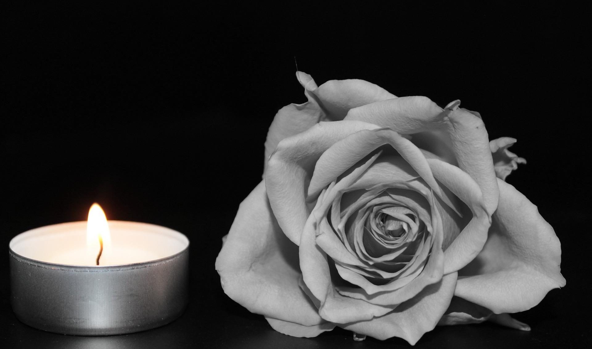 rose-1273740_1920