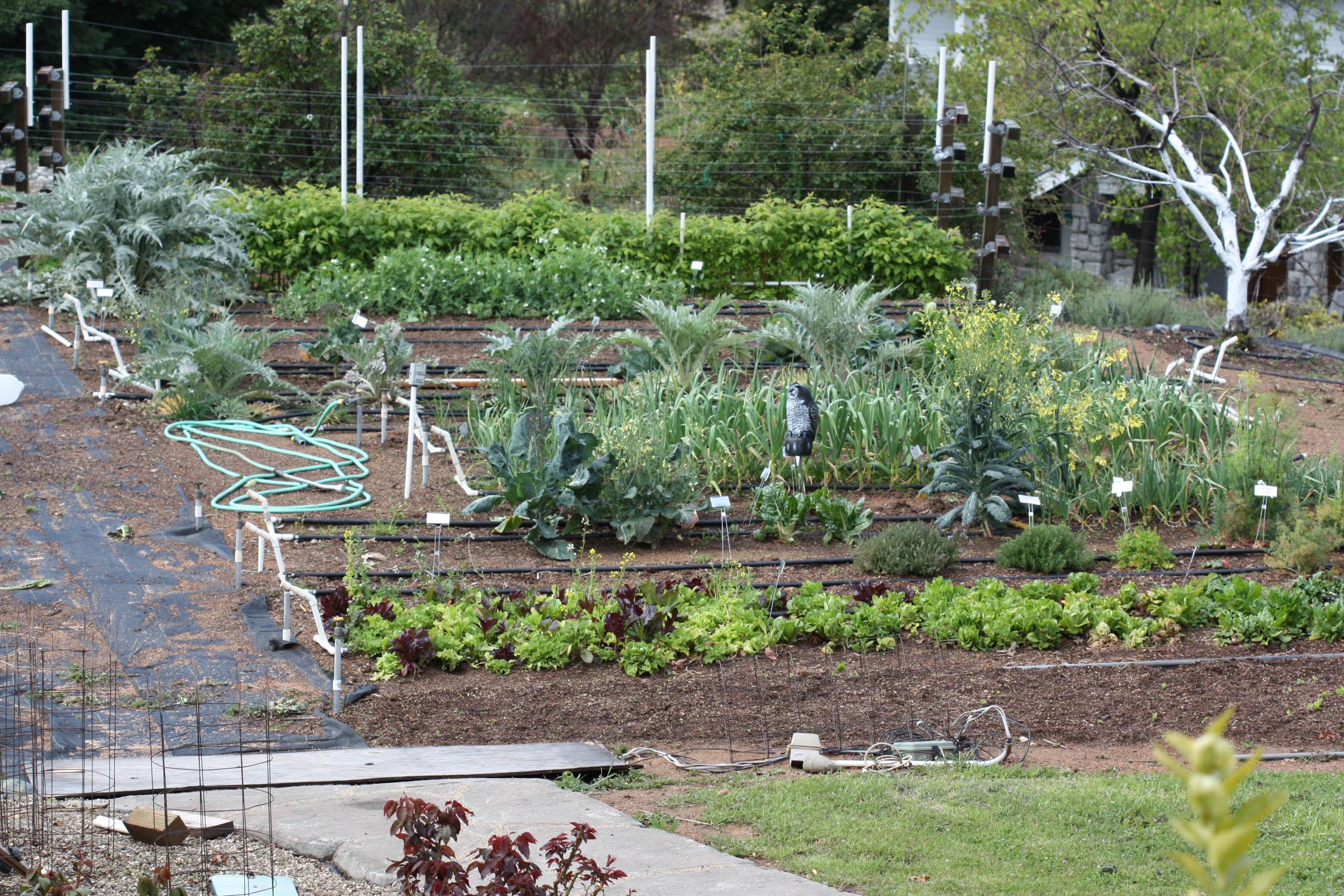 Garden Plot Ideas Native Garden Design