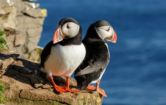Cruise Through British Isles Targets Birdwatchers & History Buffs Alike