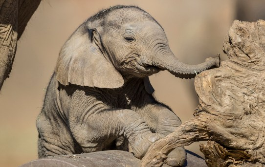 Baby Boom at San Diego Zoo Safari Park! Say Hello to the New Arrivals