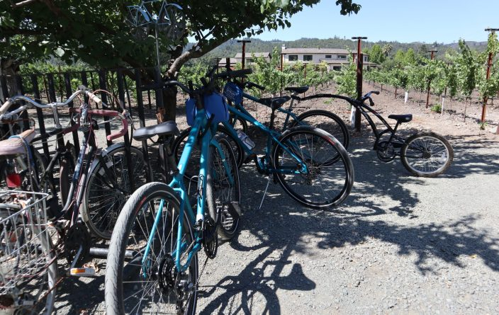 bikes under a tree next to a vineyard in Calistoga, California