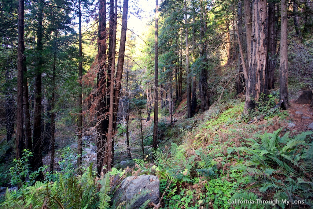 Limekiln State Park And Limekiln Falls In Big Sur California Through My Lens