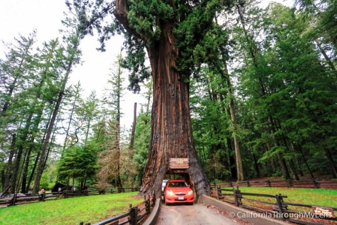 Chandelier Trees | Chandelier Ideas