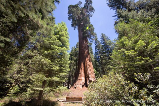 General Grant Trail  Grove Exploring the Nations Christmas Tree in Kings Canyon National Park