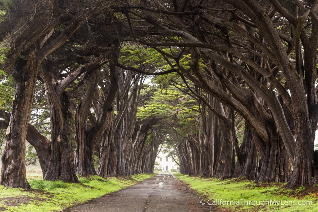 Mystical Fall Desktop Wallpaper Cypress Tree Tunnel In Point Reyes National Seashore