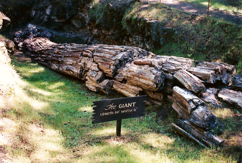 Petrified Forest in Sonoma County