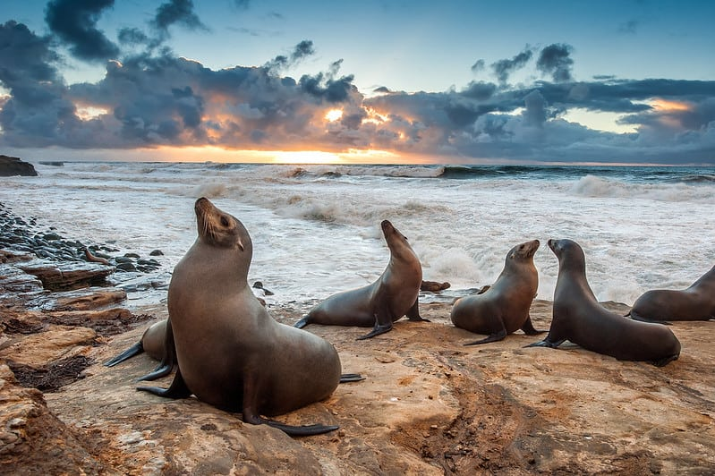 La Jolla is a great beach town and weekend destination