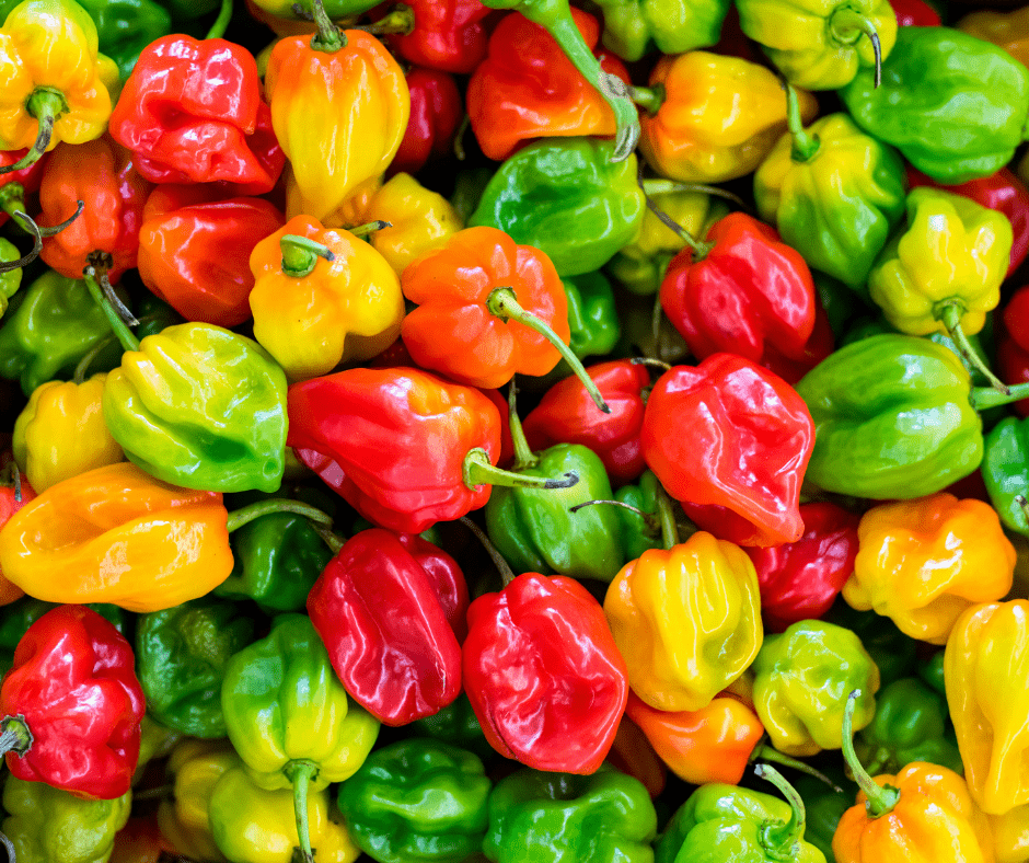 Colorful Peppers Add Some Spice to Your Garden