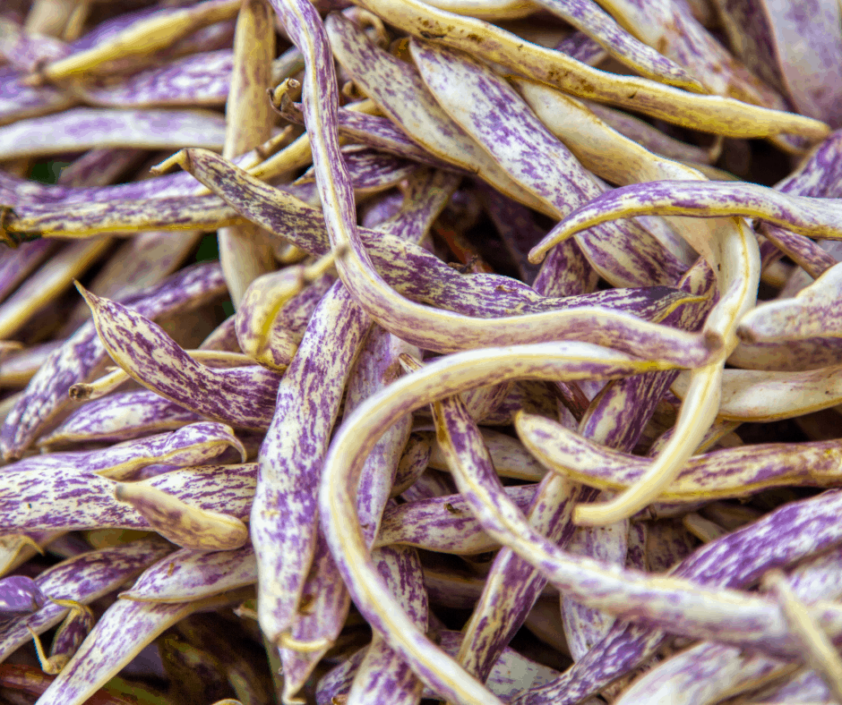 Dragon's Tongue Beans are easy to grow in Southern California