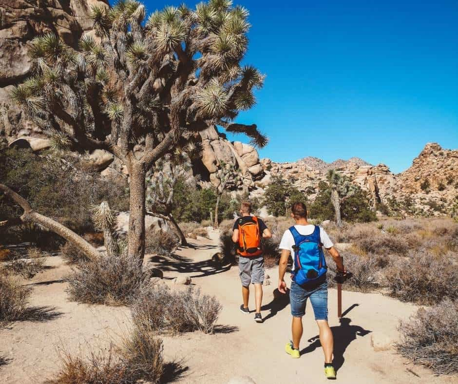 Make sure you bring proper gear on your Joshua Tree day trip