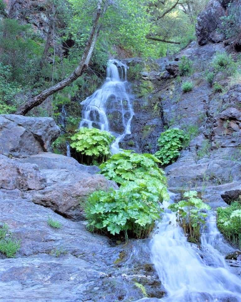 Codfish Creek Falls is a great hike near Sacramento