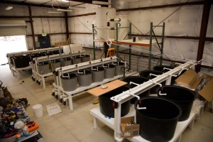 Delta Smelt Refuge facility with tanks for genetically diverse smelt populations.