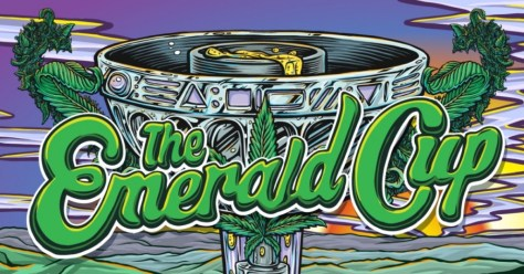 Six Emerald Cup Entries Test Negative for Cannabinoids