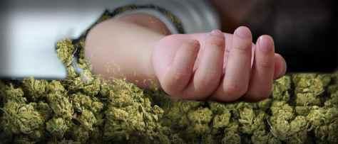 Opioid Overdoses Down In Legal Marijuana States