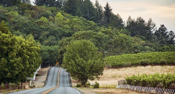 Highway 12 Wineries