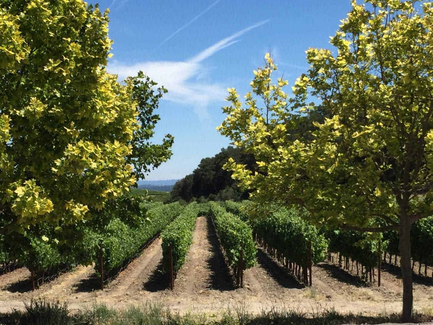 Cheap Napa Valley Tours From San Francisco