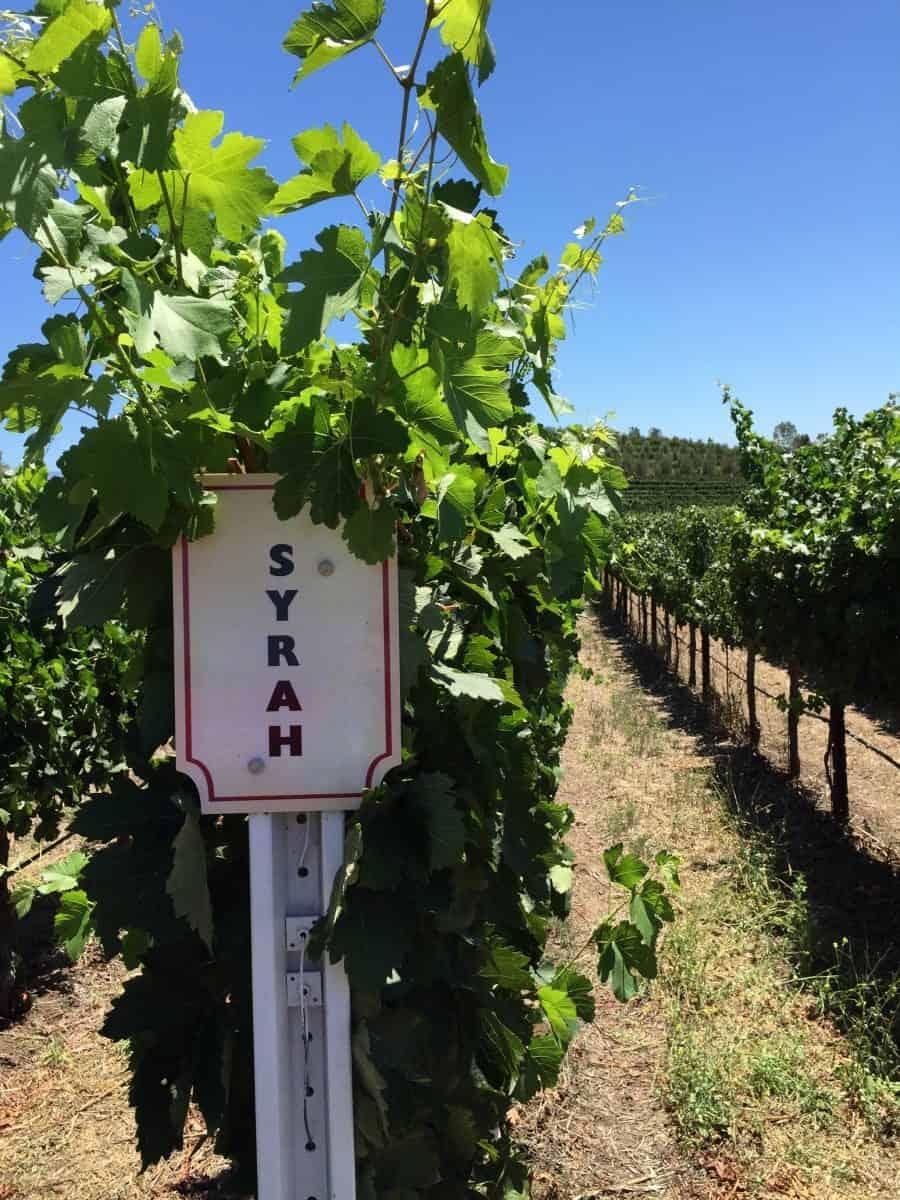 temecula winery doffo