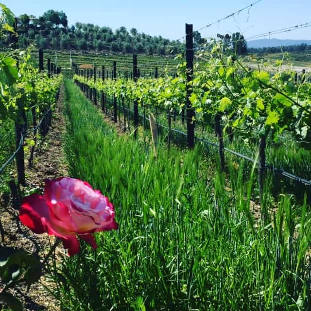 Temecula Wineries The Ultimate Visitors Guide For 2018