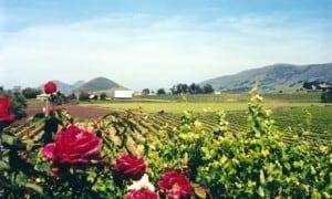 Wolff winery
