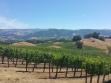 Jordan Winery Vineyard