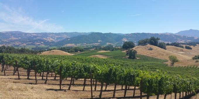 Jordan Winery Vineyard Sonoma