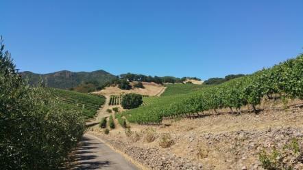 kamen winery vineyards