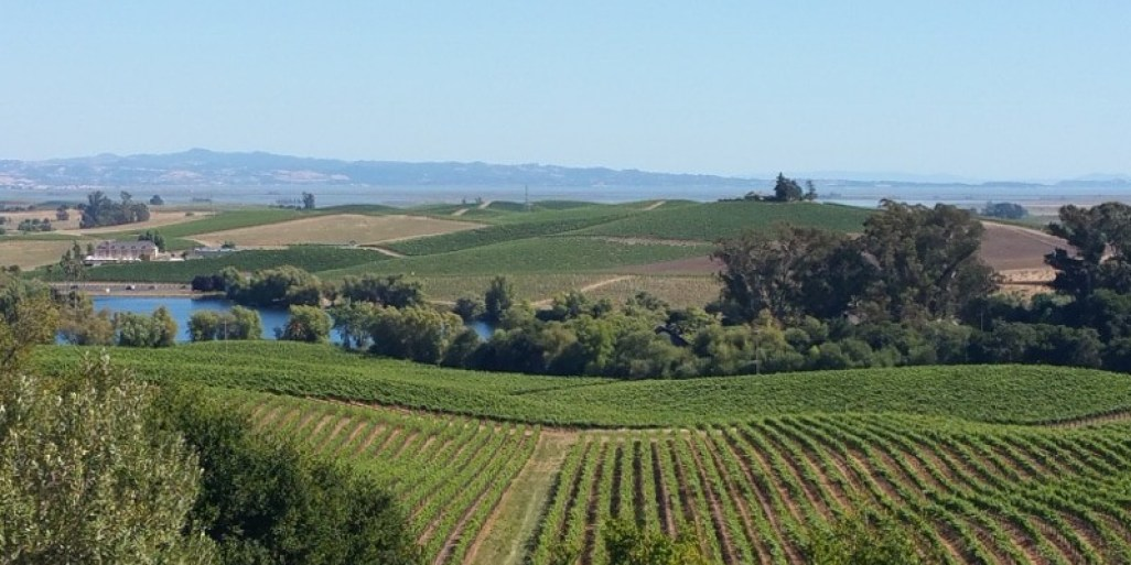 Artesa winery carneros