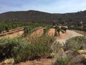 best ramona wineries