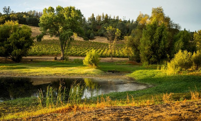best amador county wineries renwood
