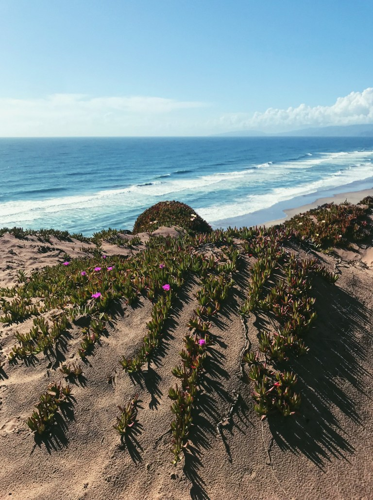 sand dunes and sea figs