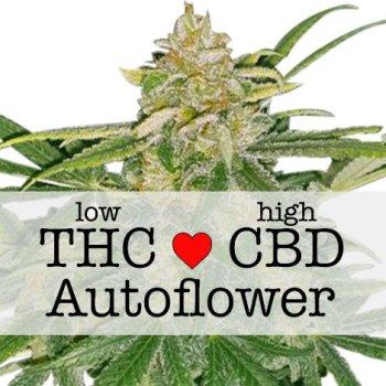 Critical Mass CBD Autoflower